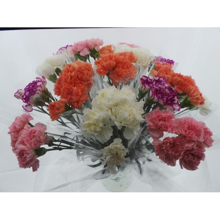 <h4>Bouquet Mono Anjers x5 mix 50cm</h4>