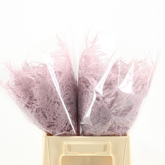 <h4>1e veren KLB H% Light pink</h4>