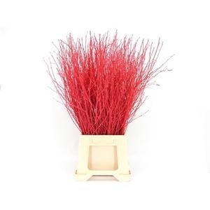 Berk teñido rojo