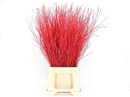 <h4>Berk teñido rojo</h4>