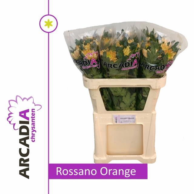 <h4>CHR G ROSSANO ORANGE</h4>