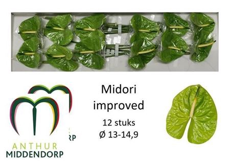 <h4>ANTH A MIDORI IMP X12</h4>