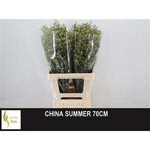 LIM SIN CHINA SUMMER