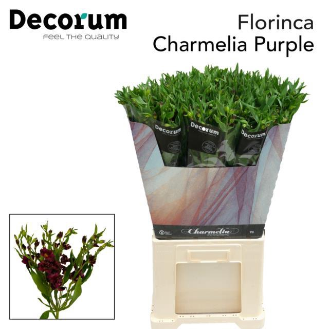 <h4>Flor Charmelia Purple</h4>