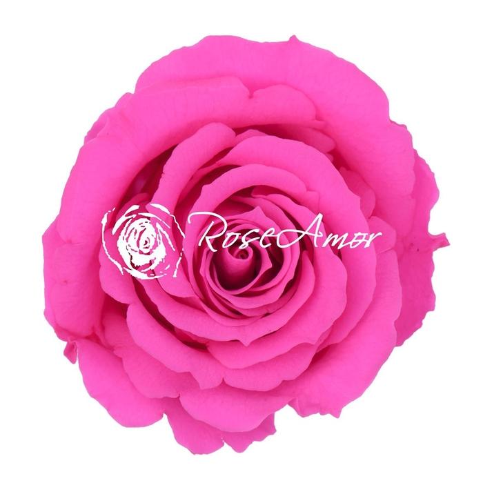 <h4>PRESERVED ROSA MINI WARMI PIN 07</h4>