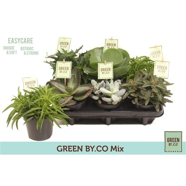 <h4>Green by.co mix 3 soorten (succulent)</h4>