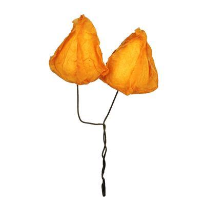 <h4>Bijsteker physalis 2x4cm + 12cm stok oranje</h4>