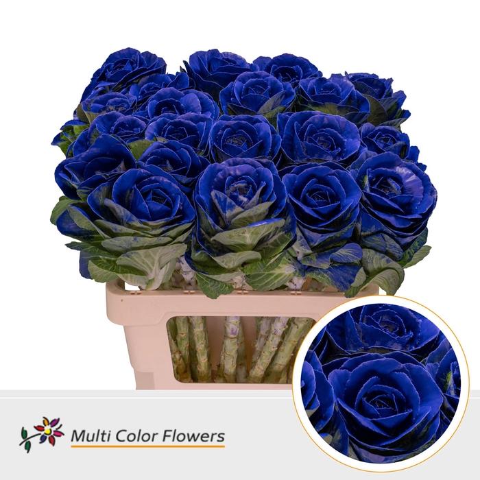 <h4>Brassica  Blauw donker</h4>