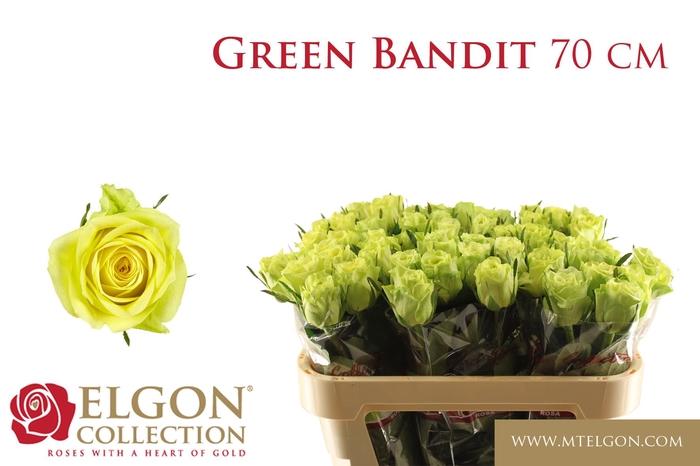 <h4>R GR GREEN BANDIT!</h4>