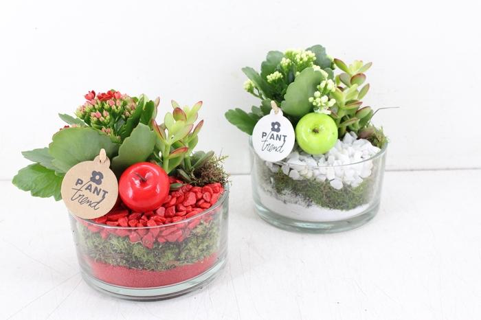 <h4>arr. PL - Glas cilinder laag - rood/wit</h4>