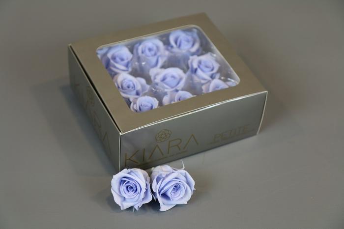 <h4>Rosa Preserved Cool Lavender Petite</h4>