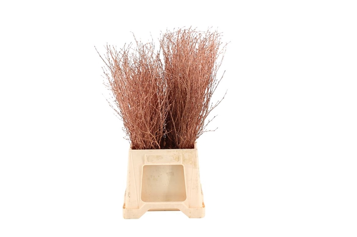 <h4>Berk ( Birch ) Copper</h4>