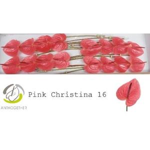 ANTH A PINK CHRIS