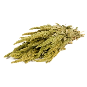 Amaranthus Green nat. Craft
