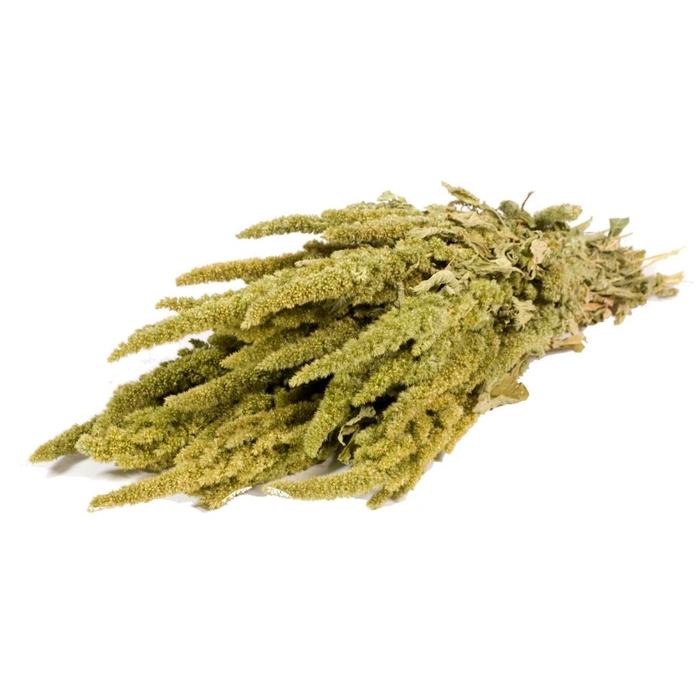 <h4>Amaranthus Green nat. Craft</h4>