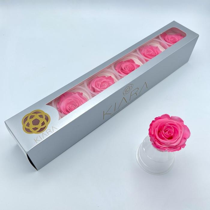<h4>R PR Splendid Pink Bride</h4>