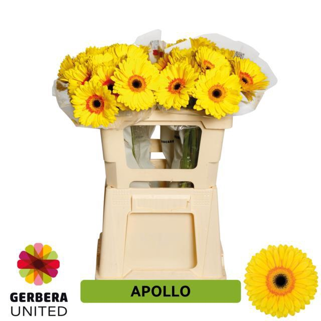 <h4>GE GR Apollo water</h4>