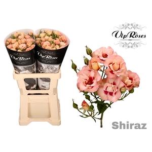 R TR SHIRAZ