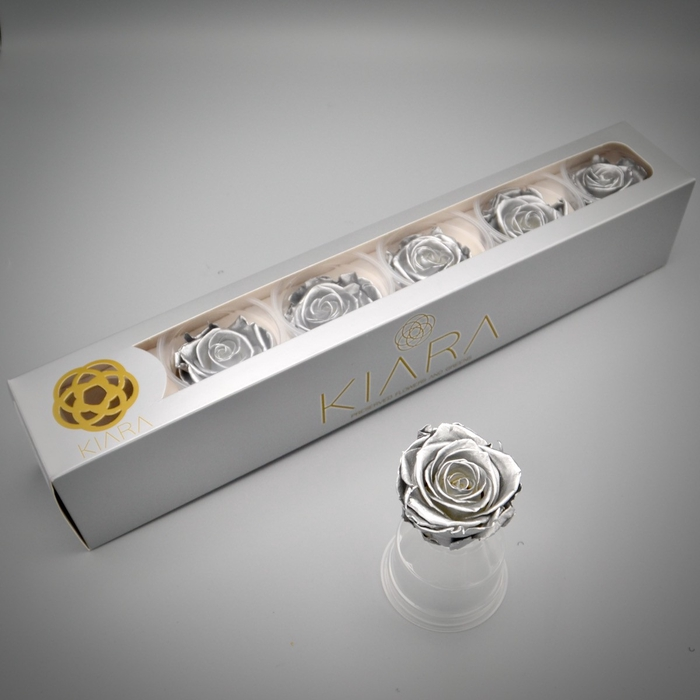 <h4>R PR Splendid Silver</h4>