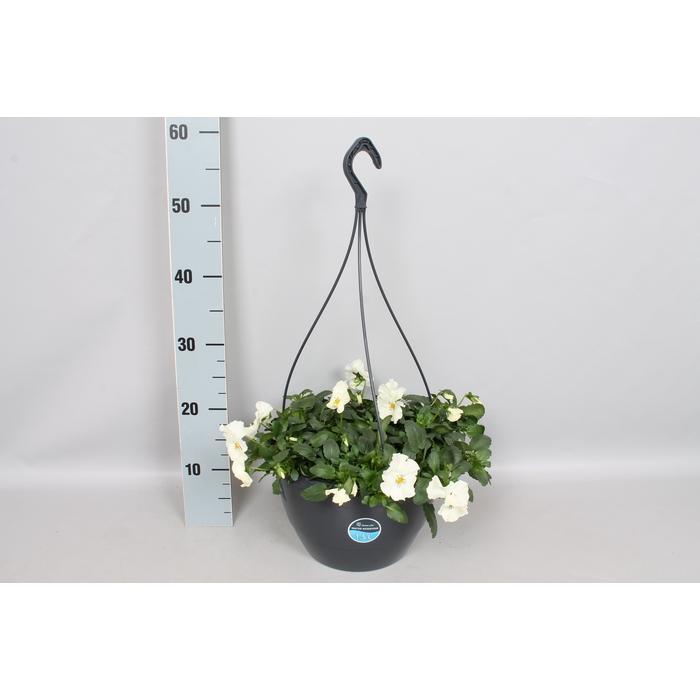 <h4>Hangpotten 27 waterreservoir Viola Coolwave White</h4>