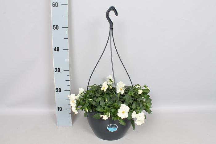 Hangpotten 27 waterreservoir Viola Coolwave White