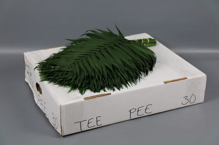 <h4>TeePee</h4>