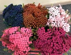<h4>Greens - Albiflora Tint Mix P/Color Lav/Pi/Bl/Pu/Red/Gr/Cerise</h4>