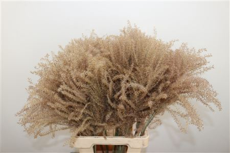 <h4>DRIED STIPA FEATHER PTK NATUREL</h4>