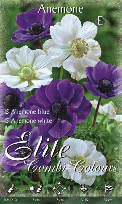 <h4>Z Anemone 15 Blue & 15 White</h4>