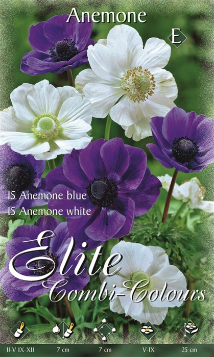 Z Anemone 15 Blue & 15 White