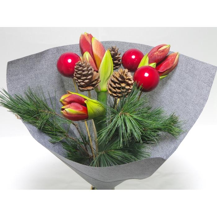<h4>Christmas Amaryllis Red</h4>
