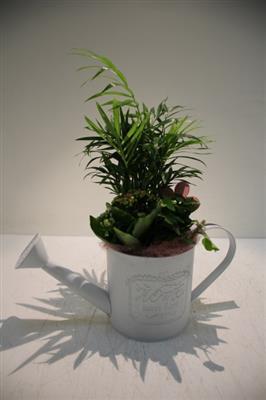 <h4>PT14991 WITTE GIETER PLANTS</h4>