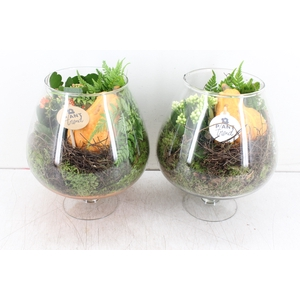 arr. PL - Glas Cognac herfst