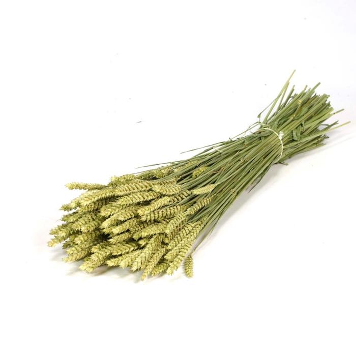 <h4>DRIED FLOWERS - TARWE NATURAL GREEN</h4>
