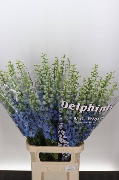 <h4>Delphinium El Dewi Morning Blue</h4>