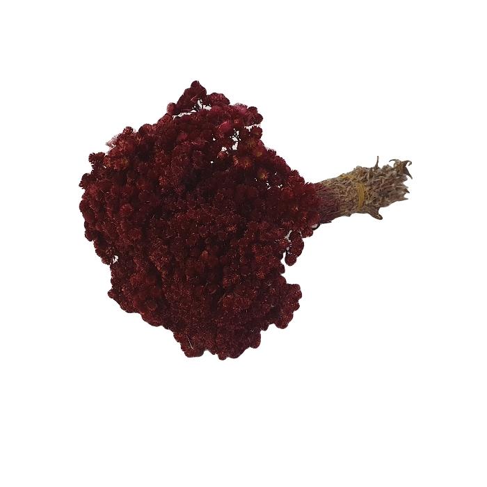 <h4>DRIED FLOWERS - IMMORTELLE BORDEAUX</h4>