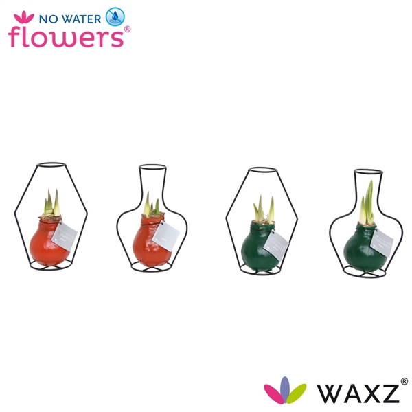 <h4>No Water Flowers Waxz® Formz mix</h4>