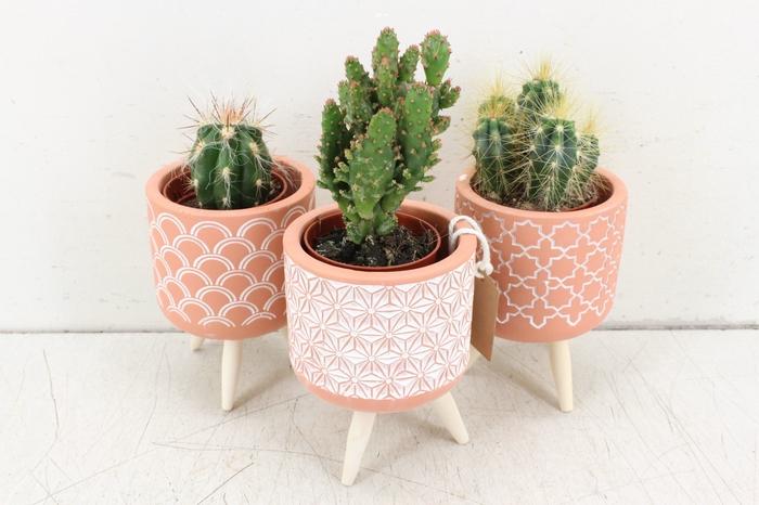 <h4>arr. UB - Ker. terra potje pootjes S cactus</h4>