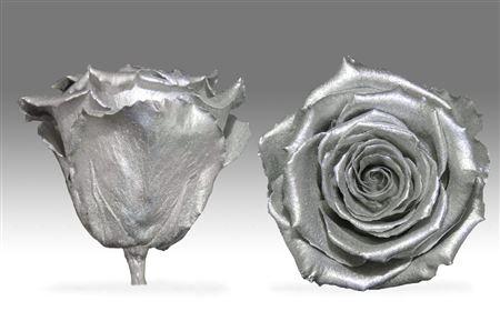<h4>Pr 1.1 Metallic Silver Xl</h4>