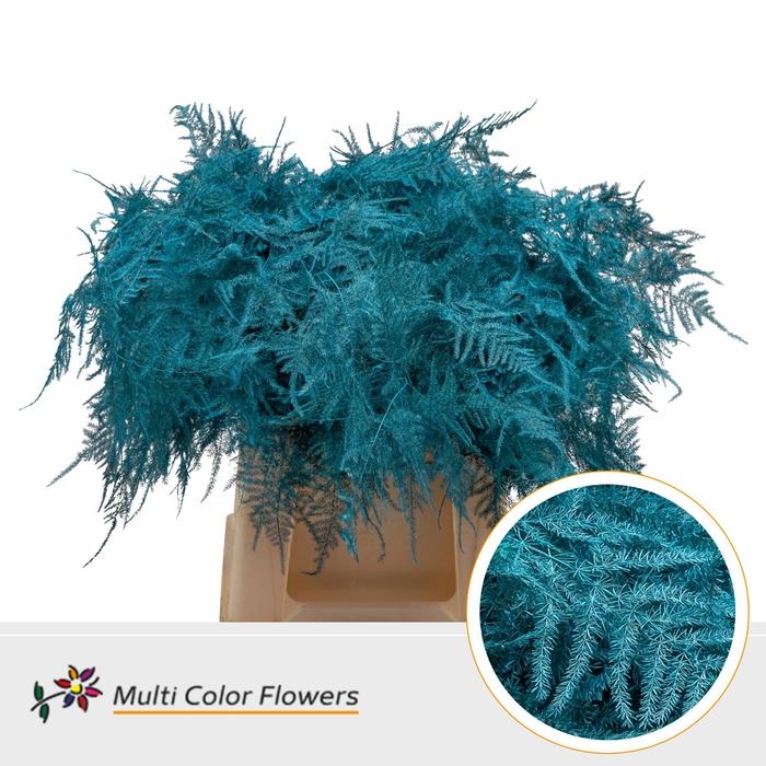 <h4>Asparagus 1e veren gekleurd Turquoise</h4>