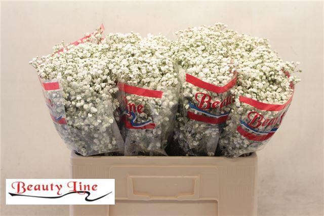 <h4>GYPS PA BEAUTY BRIDE</h4>