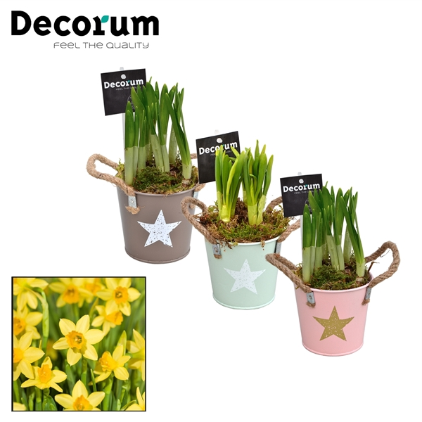 <h4>Narcis Star Bucket Mini HL10773N</h4>