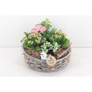 arr. PL - Tulband mand - roze