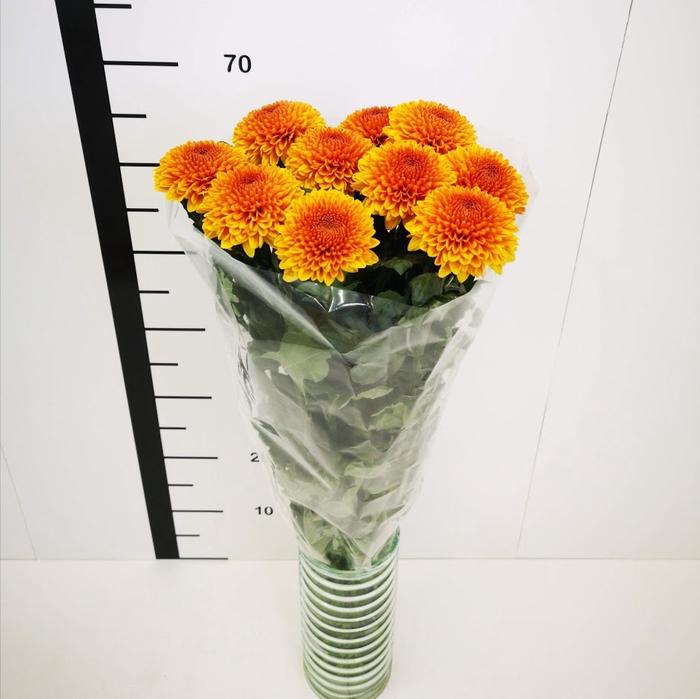 <h4>Chrysanthemum monoflor ping pong naranja</h4>
