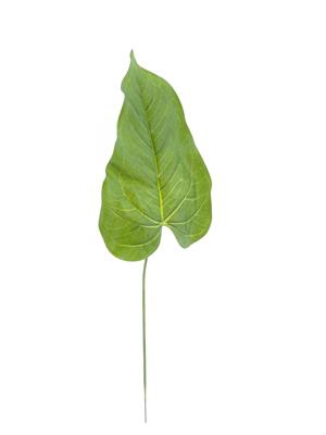 <h4>Af Tropical Leaf Rt</h4>
