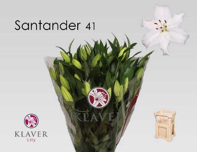 LI OR SANTANDER
