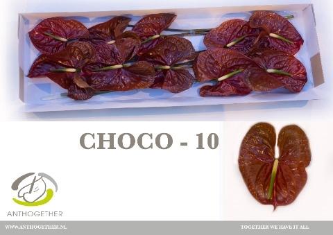 <h4>Anthurium andr. 'Choco'</h4>