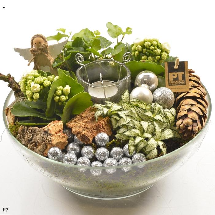 Planten  ..in schaal H%