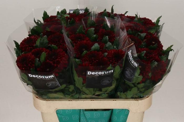 <h4>Chrysant deco Barca Red</h4>