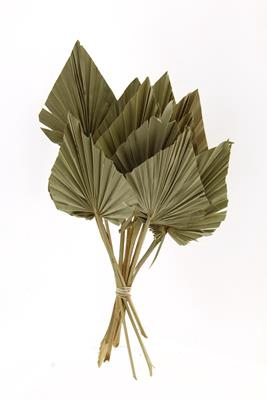 <h4>Df Palm Spear Large Natural</h4>